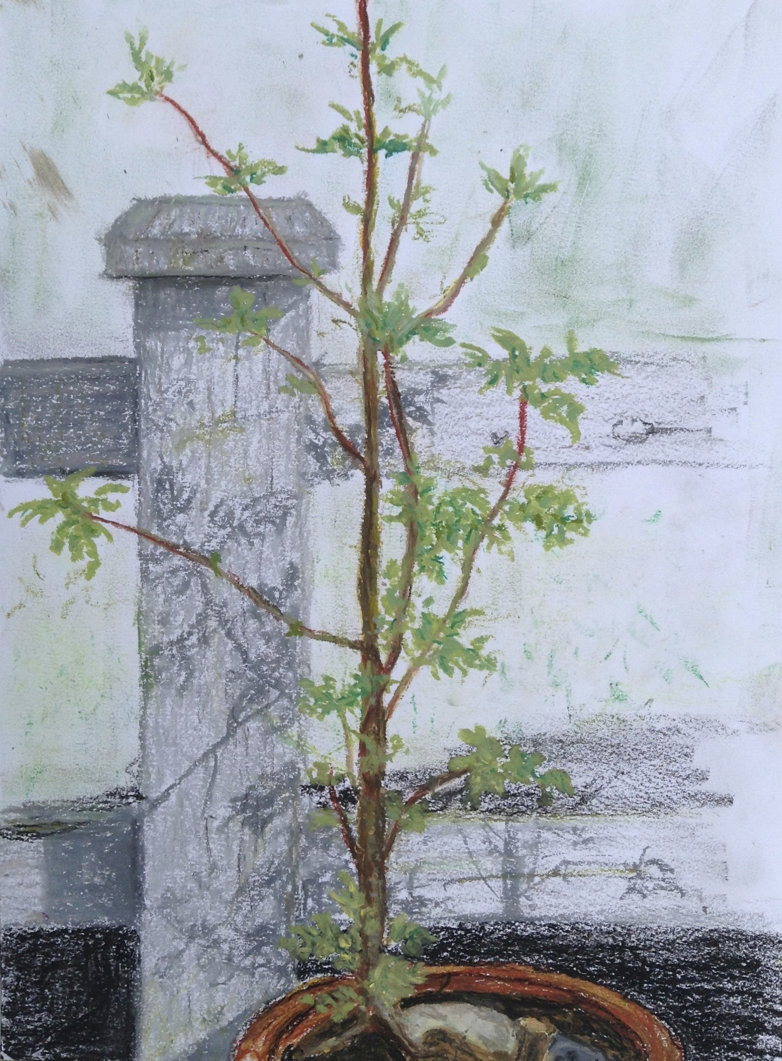 Colin Mitchell Artwork - Drawing - Oil Pastel
